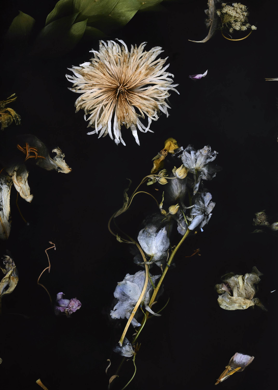 Flora Collection by Marcin Rusak on Anniversary Magazine