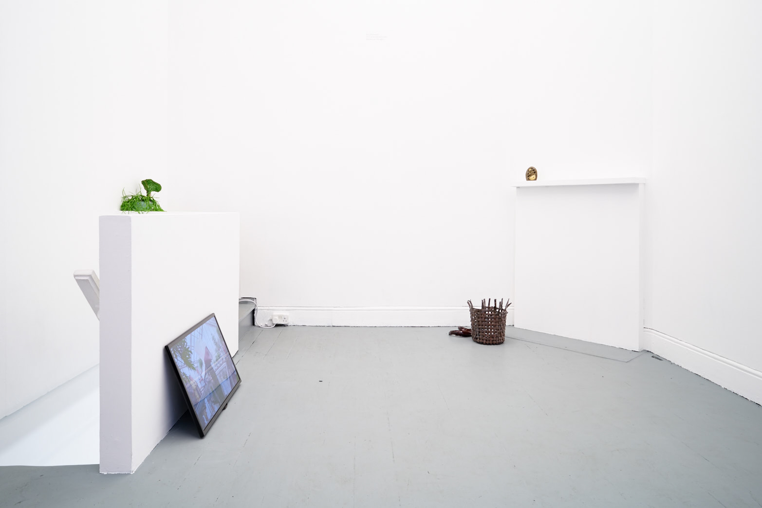 Installation view of exhibition, Becoming Plant, Tenderpixel, London.
