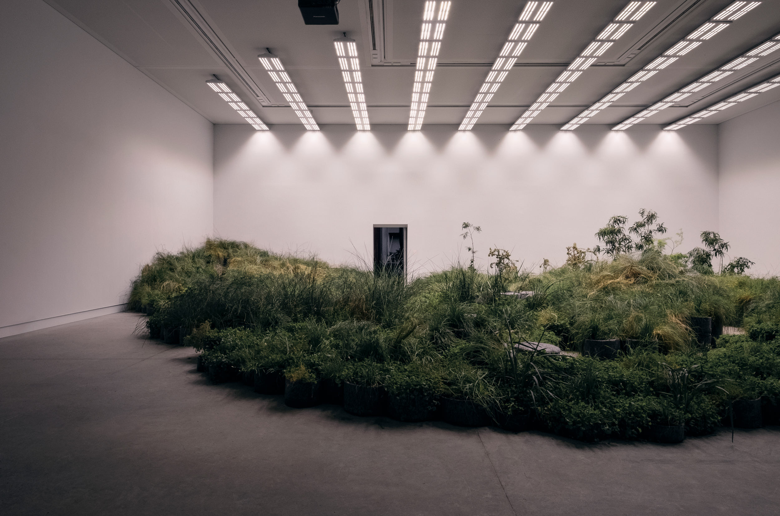 The Australian Pavilion: Repair by Baracco+Wright Architects in collaboration with Linda Tegg