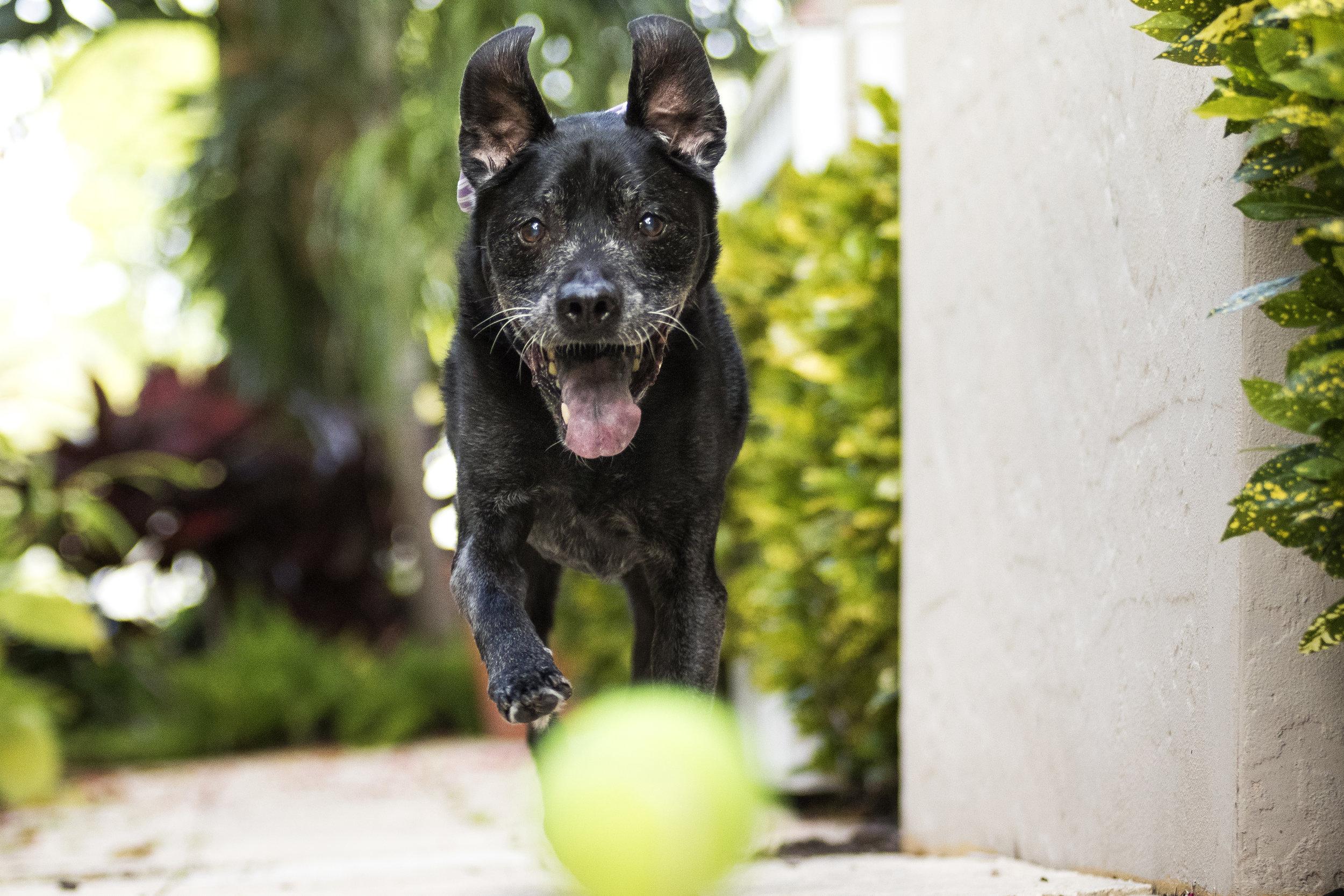 Dog portrait photography