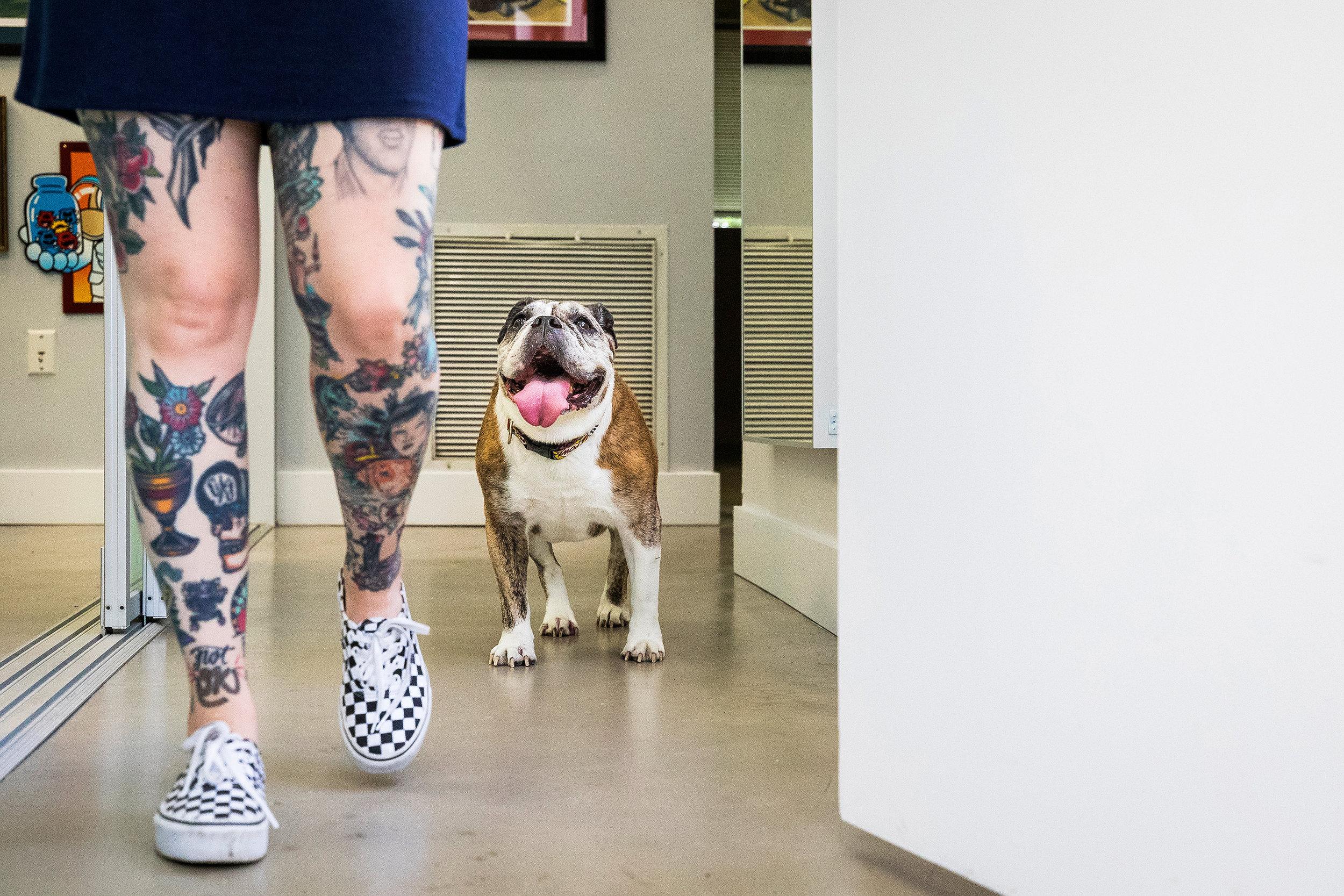 Bulldog in Fort Lauderdale