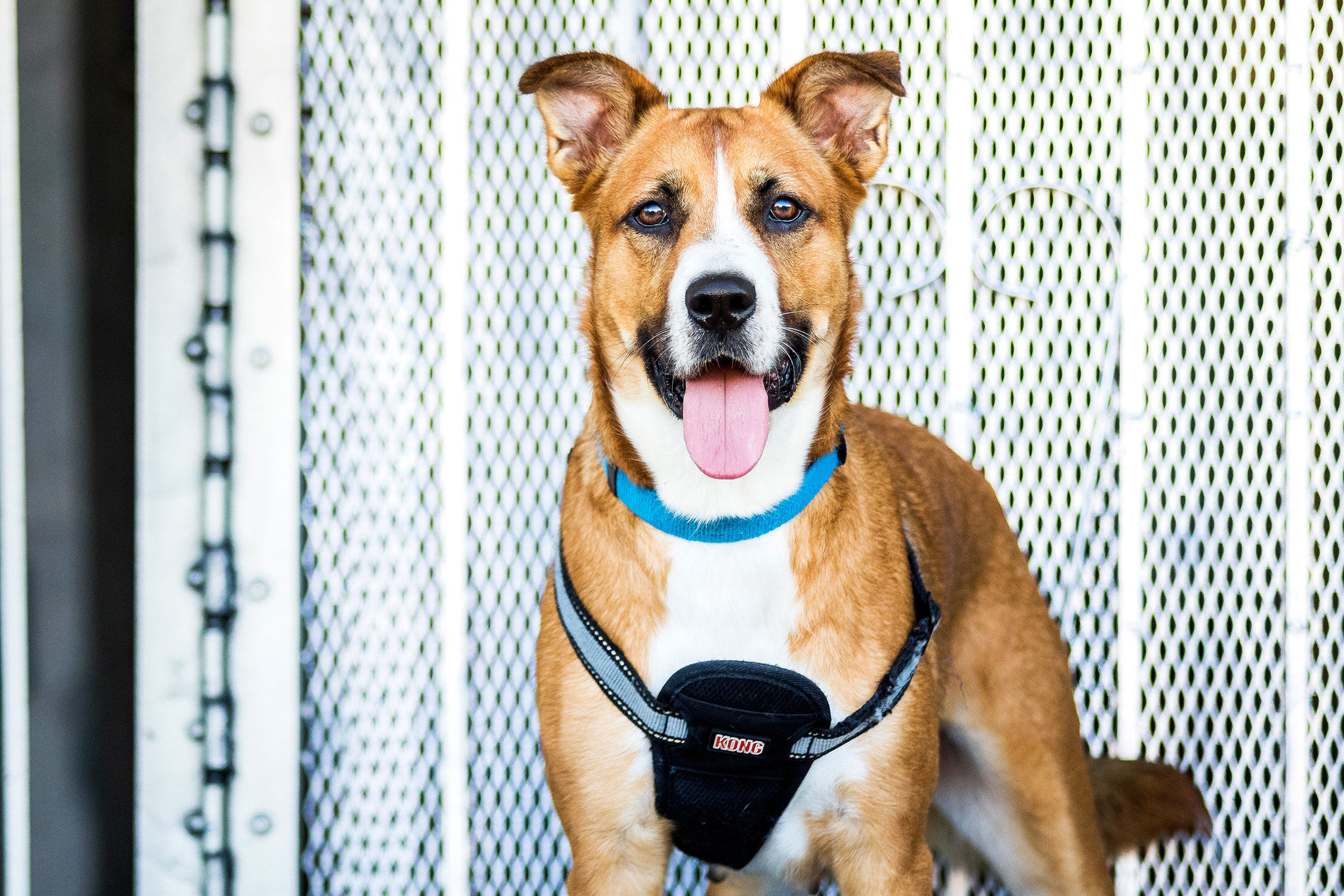 Adoptable dogs in Fort Lauderdale