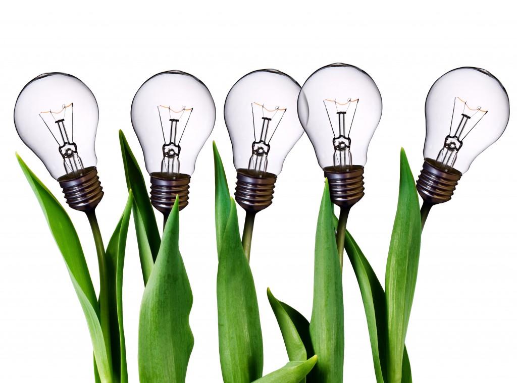 lightbulbsgrowing.jpg