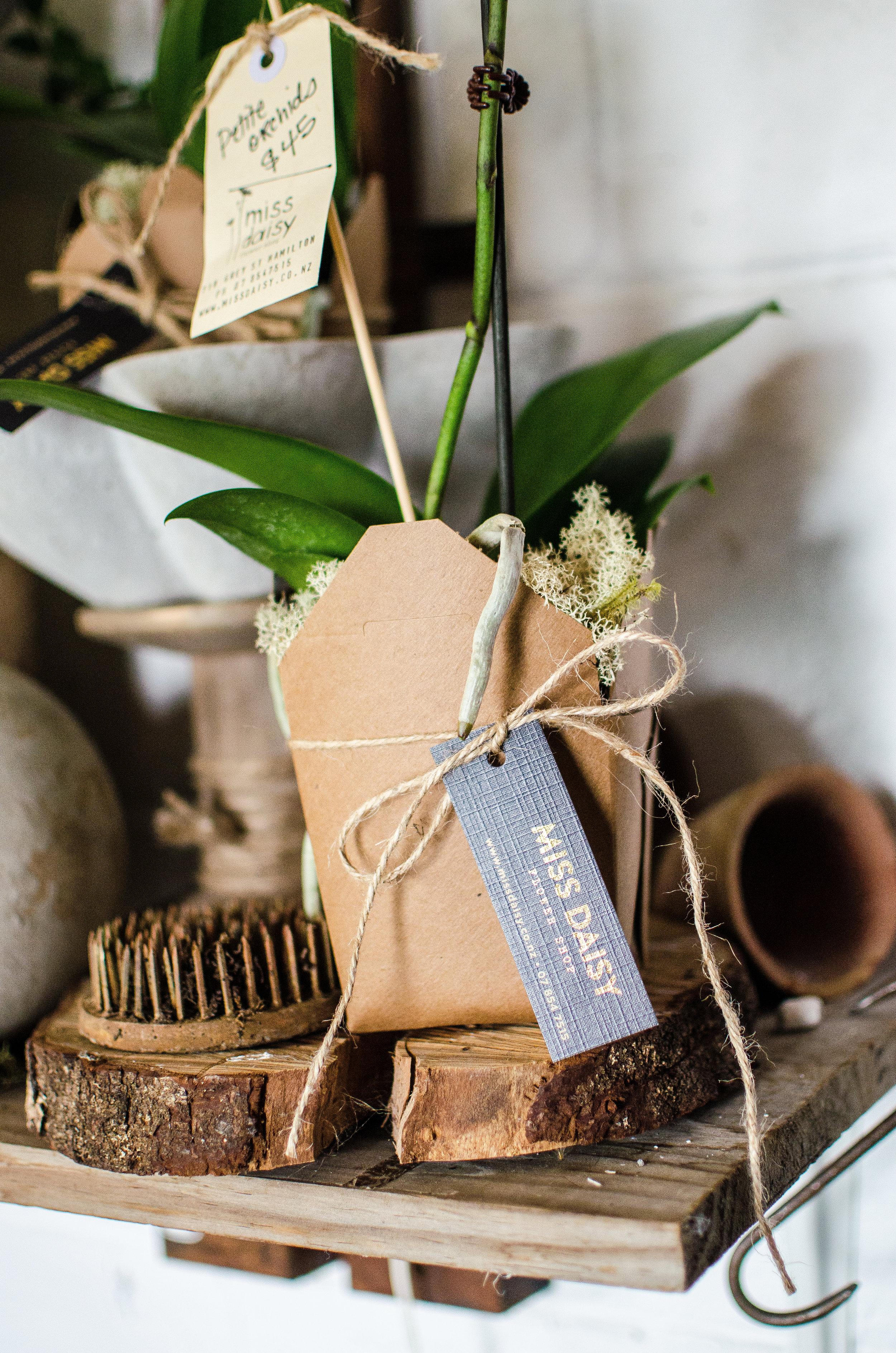 Miss Daisy Flower Shop - Audrey Fitzjohn Blog