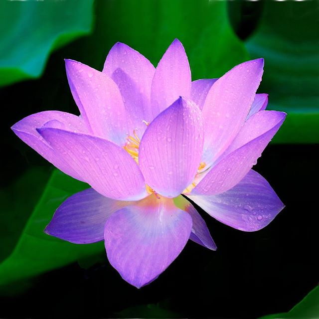 Did you know lotus flowers grow from muddy, murky waters? Don't underestimate the beauty that can bloom from a dark place.