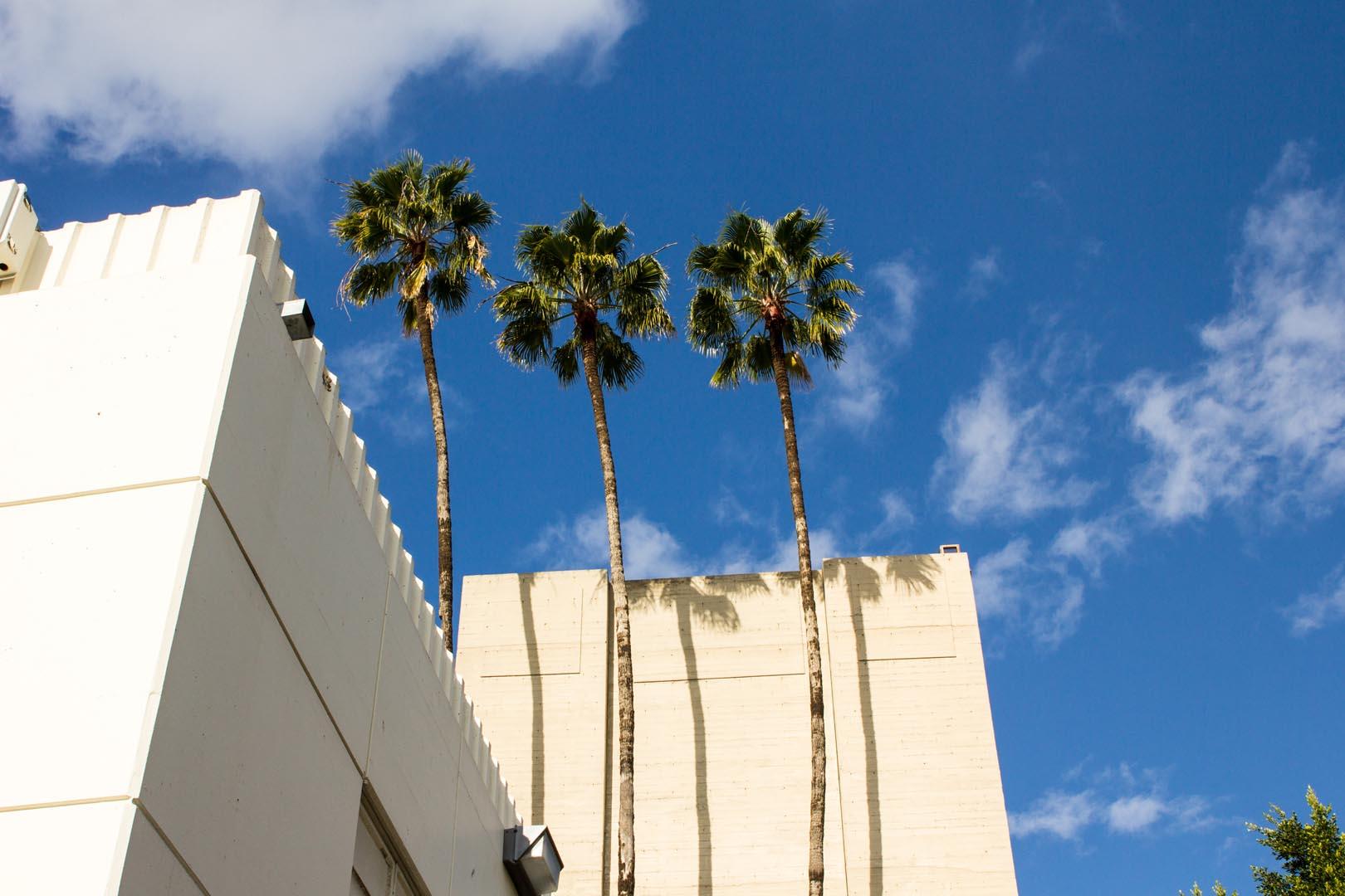 Hollywood 2017-102.jpg
