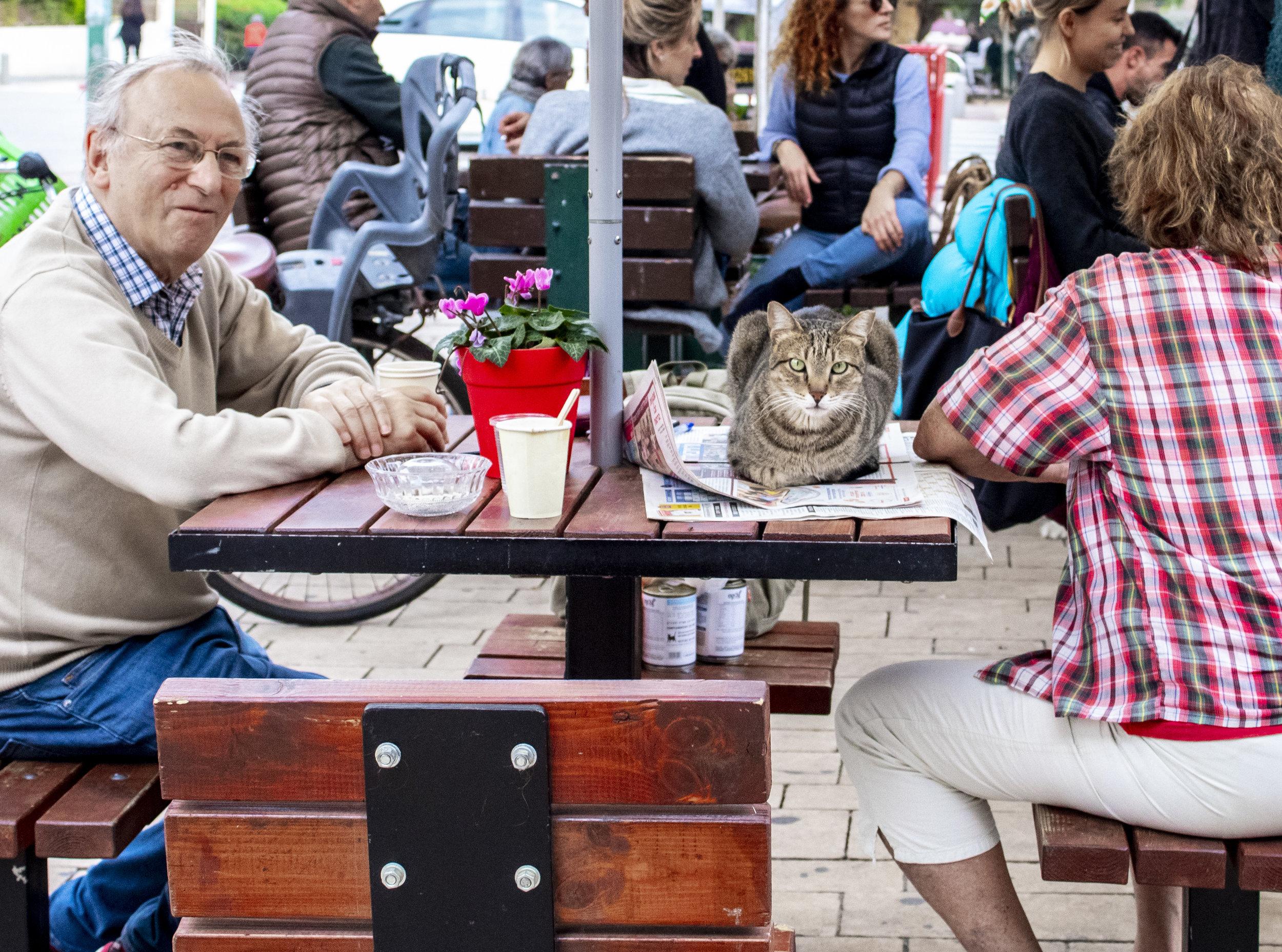 Tel Aviv cat