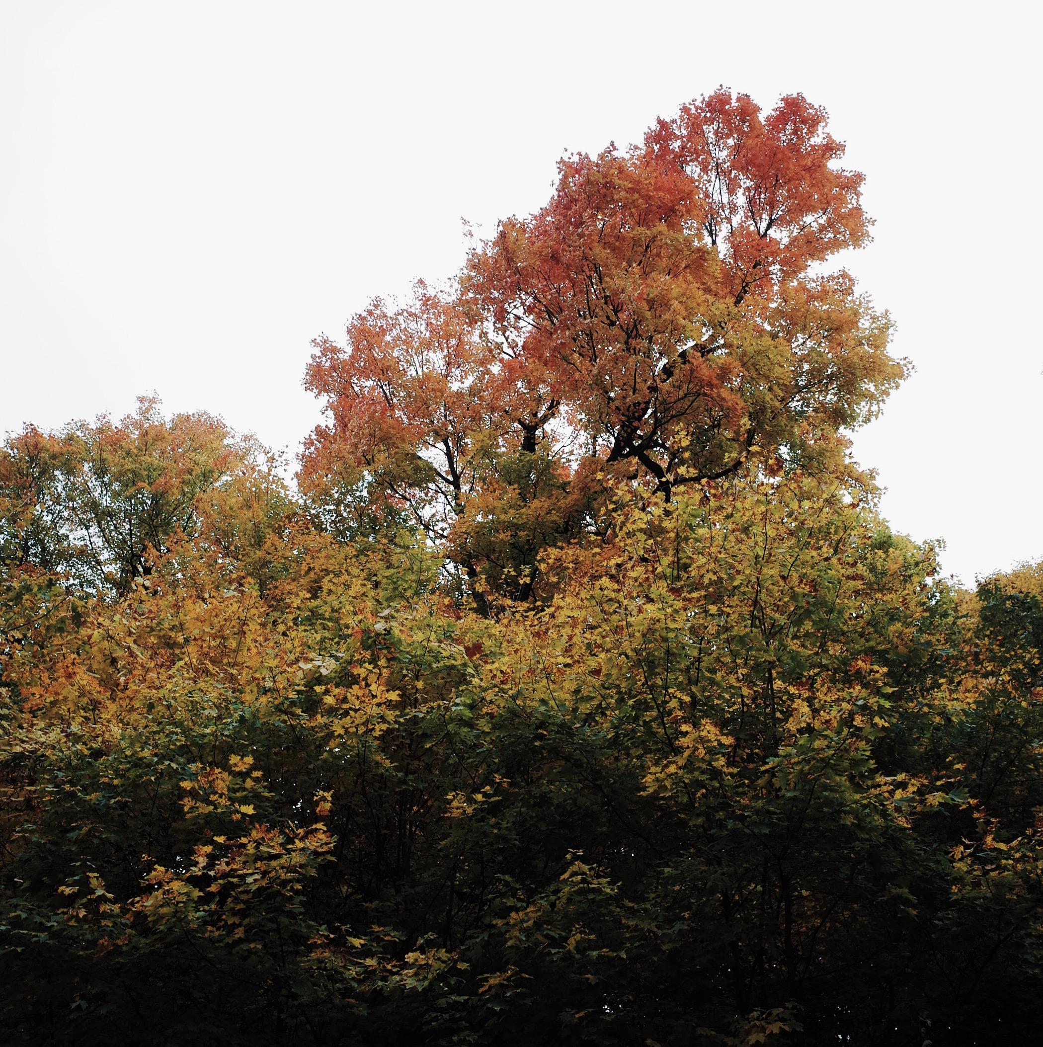 Photo Oct 15, 4 48 59 PM.jpg