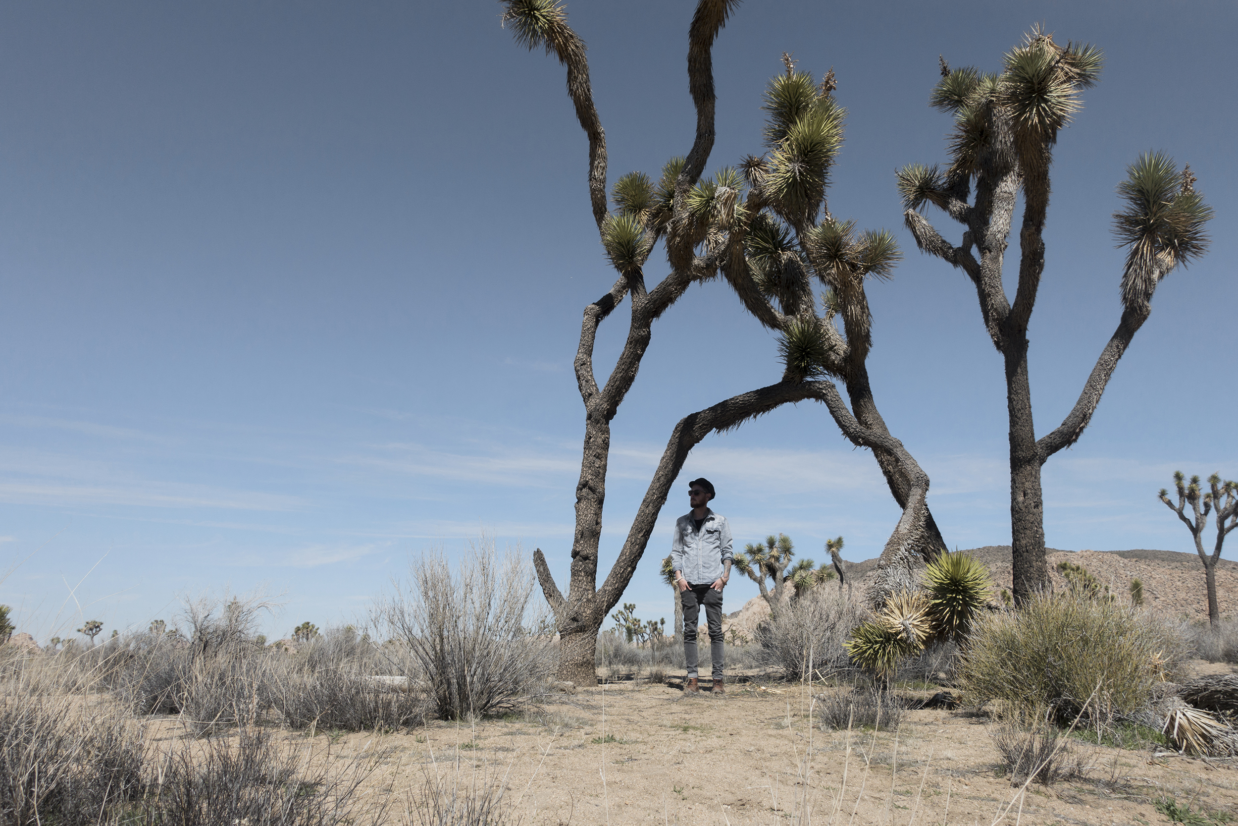 Joshua Tree, 2:00pm