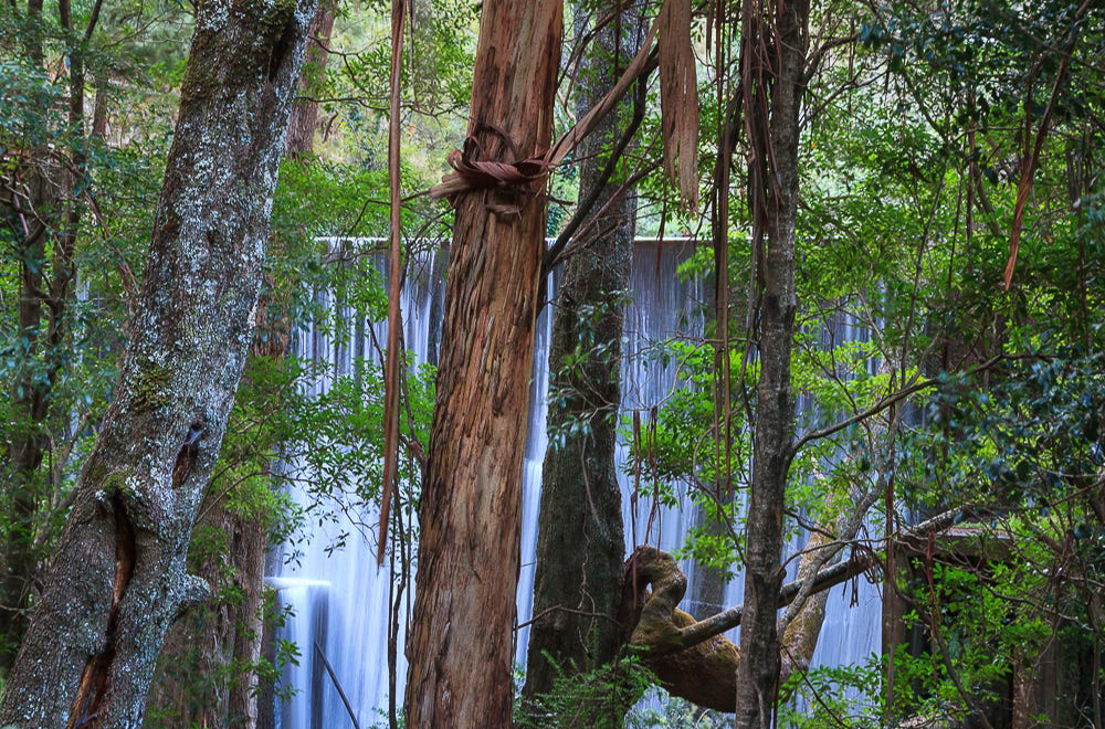 Looking through hanging bark trees to the hydro dam at Jenolan Caves