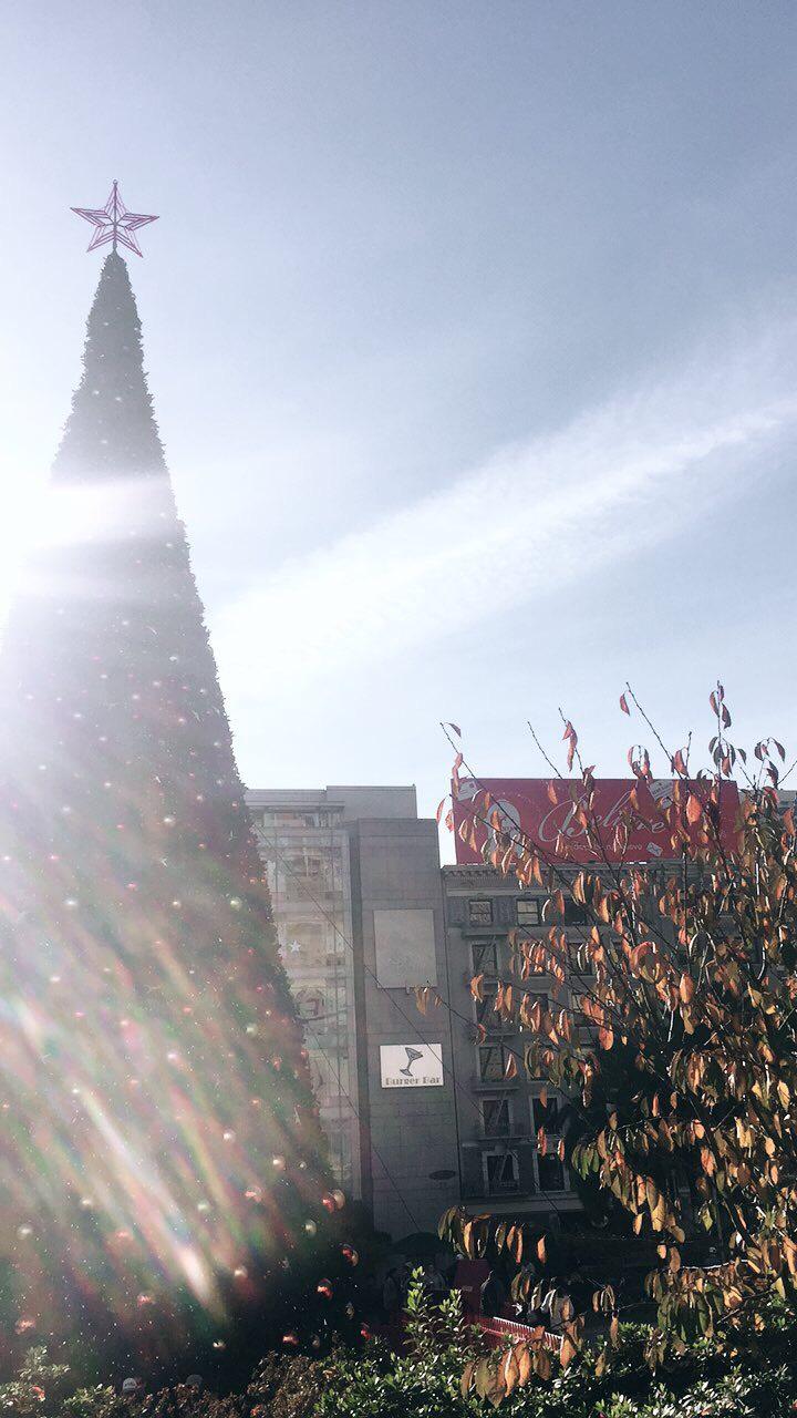 Union Square Tree