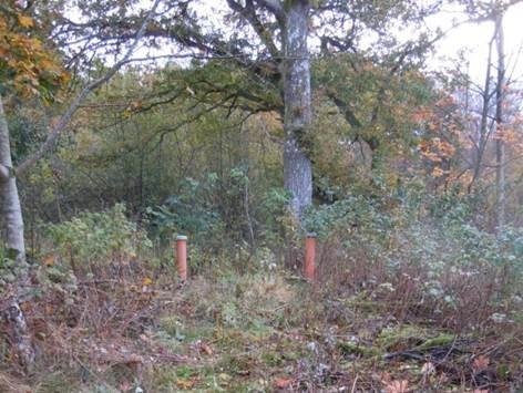 Stora träd växer nära. Rötterna kan växa in i infiltrationsanläggningen. Dags att ta ner träden.