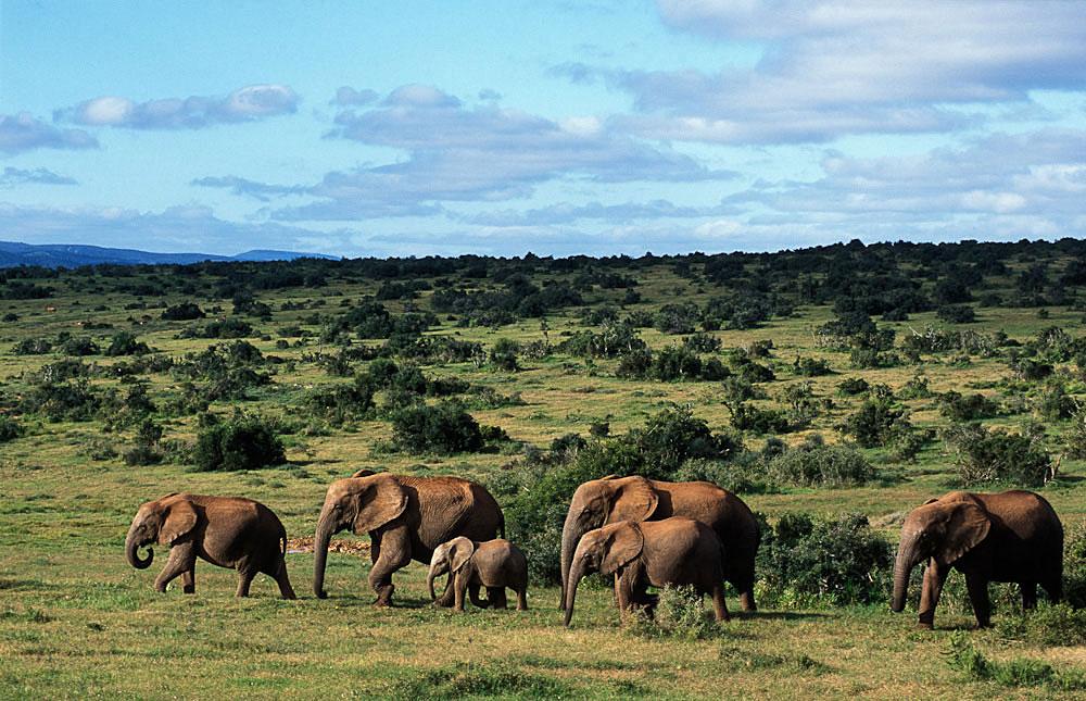 Safaris sans Paludisme -
