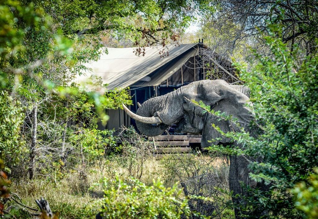 KhokaMoya_Tent_Elephant_045.jpg
