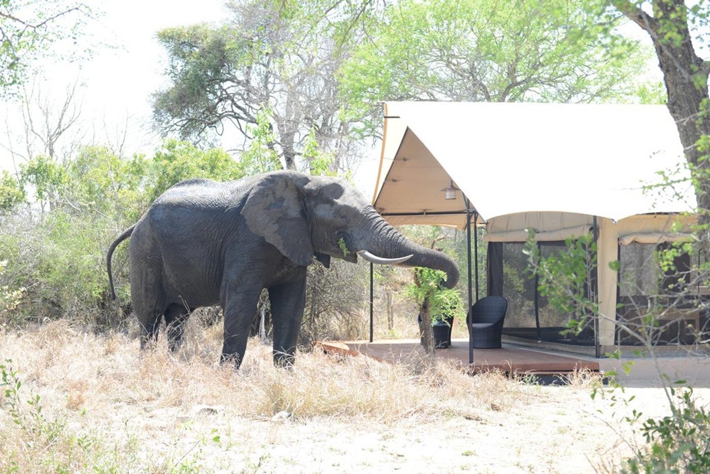 SouthAfrica_HoneyGuide_KhokaMoya_003(1).jpg