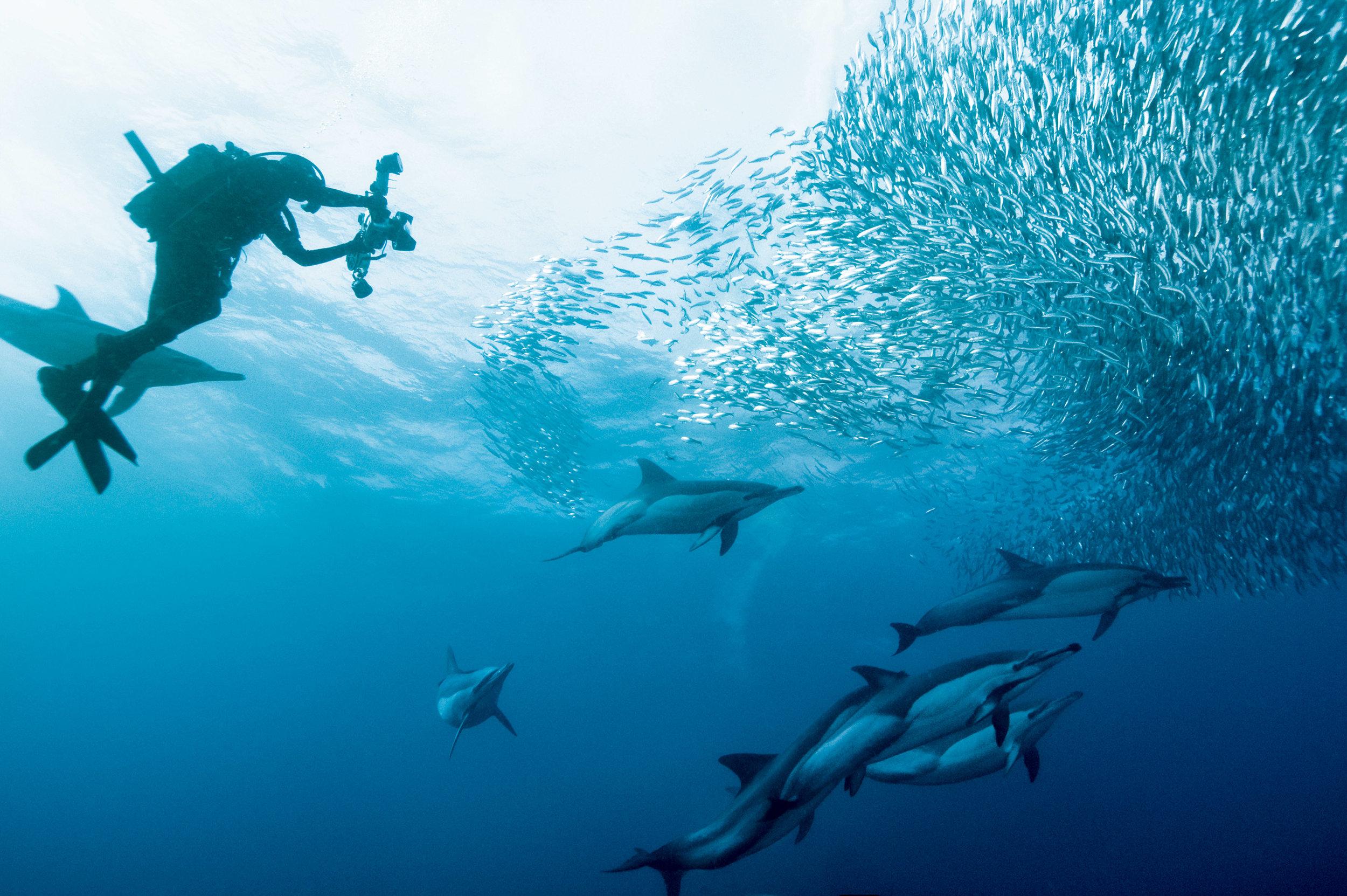 Plongée sous-marine à Sodwana Bay - Certains des meilleurs endroits pour la plongée sous-marine se trouvent dans KwaZulu-Natal. La côte d'éléphant et la côte sud sont parfaits pour cela.