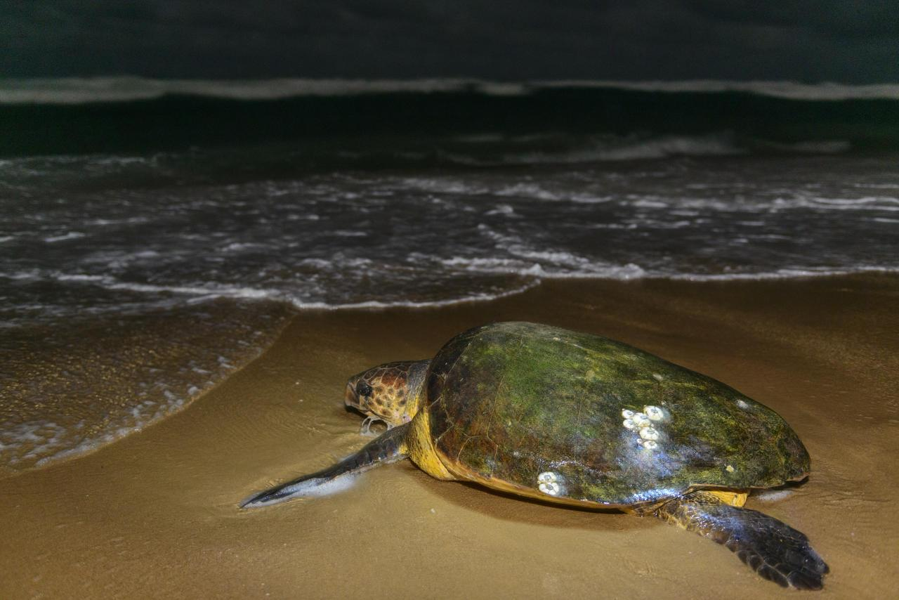 cedarberg-thonga-beach-lodge-turtle-16.jpg