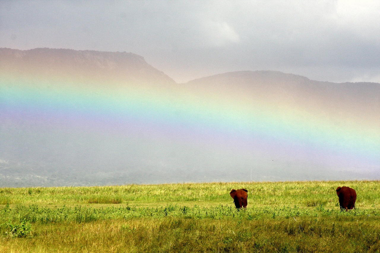 Eles  rainbow1.jpg