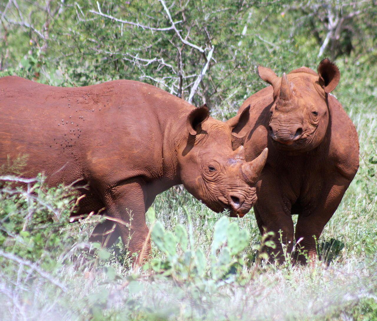 Presumably Nkosi and Umfubu 2 - 02 04 20111.jpg