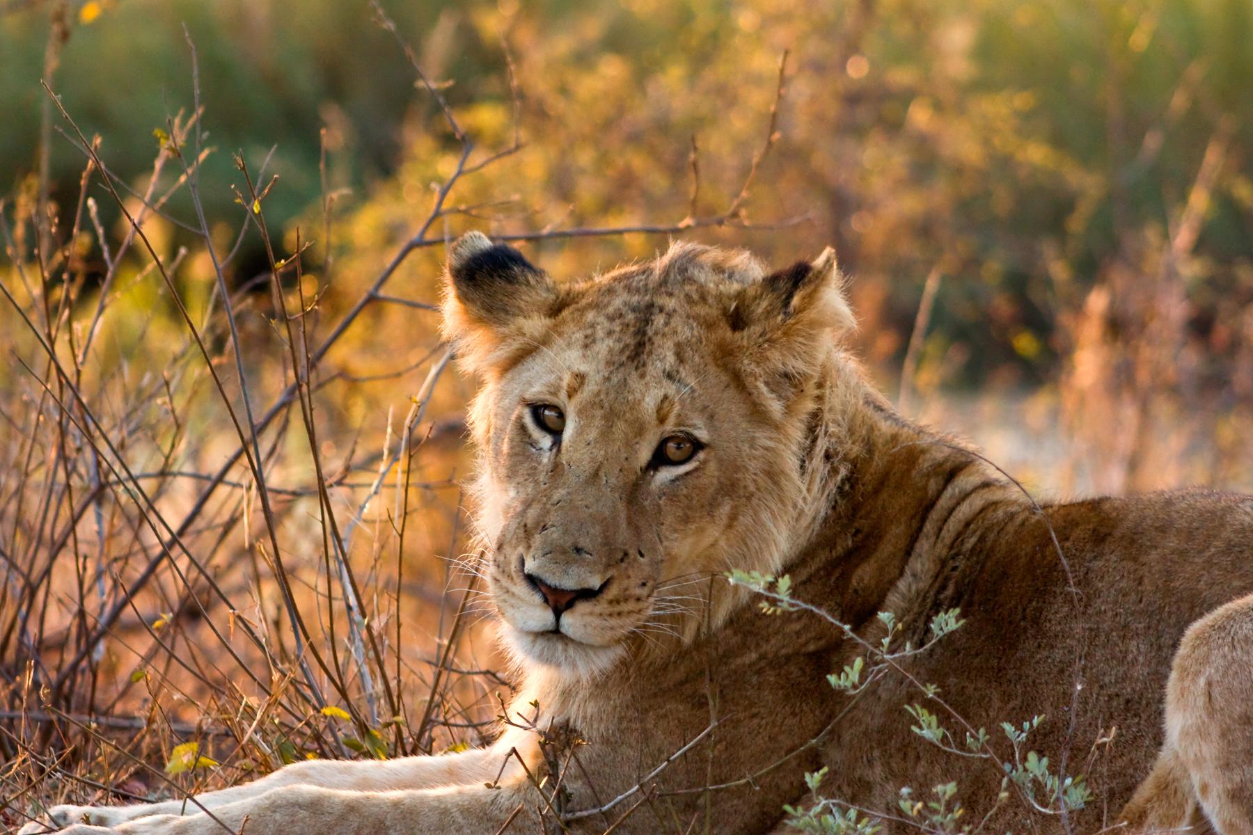 circuit le parc Kruger