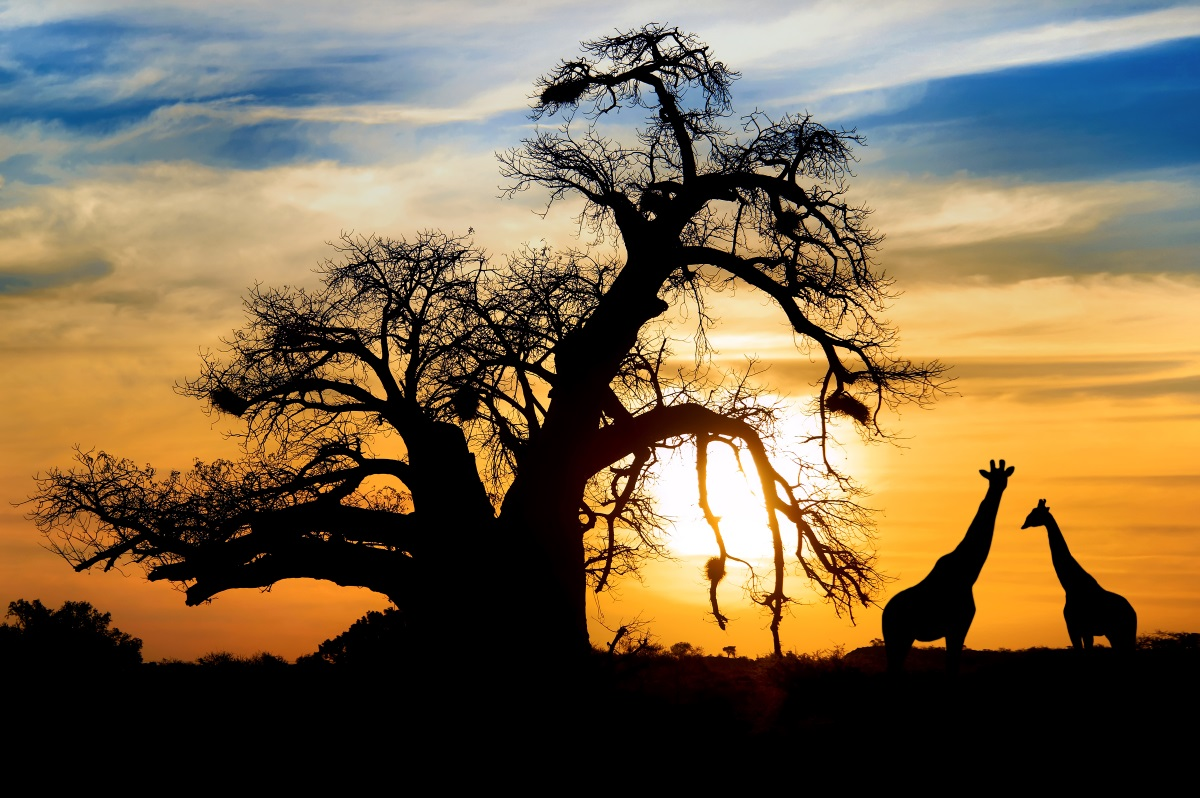 Afrique Du Sud, Swaziland Et Lesotho
