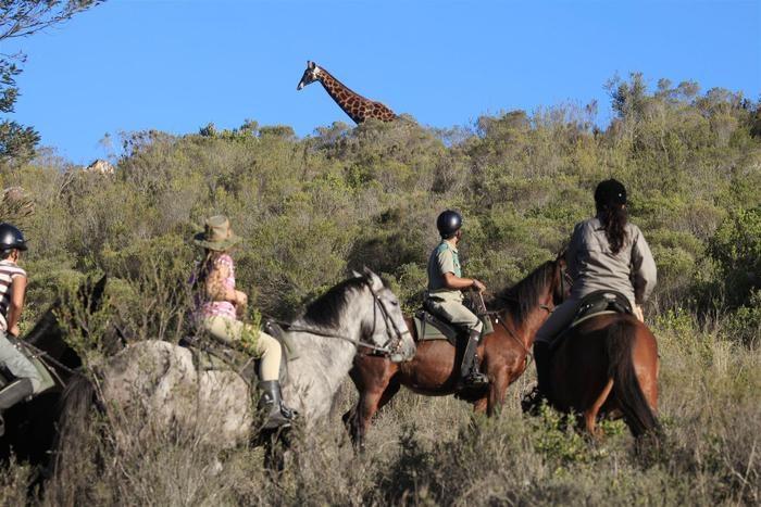 Horseback-safari-at-Botlierskop-Private-Nature-Reserve-C-TravelGround.jpg