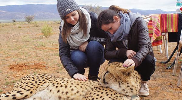 cheeta.jpg