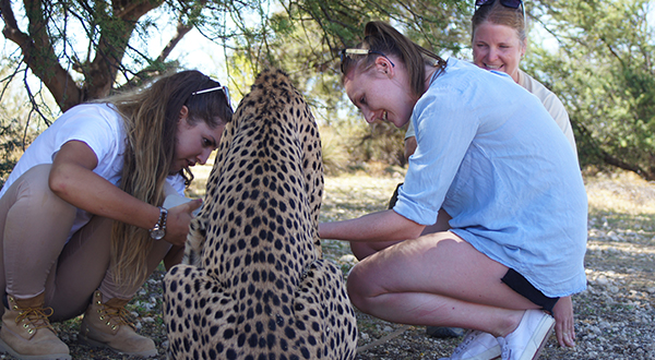 cheetah-int.jpg