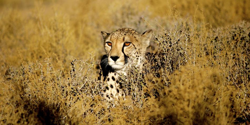 Inverdoorn Safari Cape Town