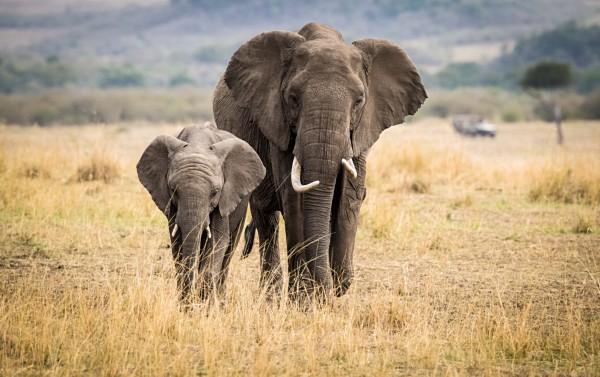 Addo Elephant National Park -