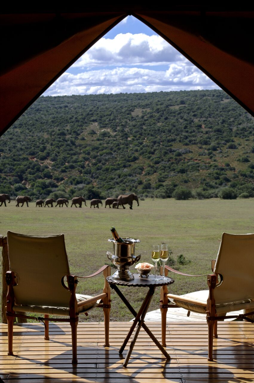 GEC-Elephant-Herd-from-Tent-Deck---Portrait.jpg
