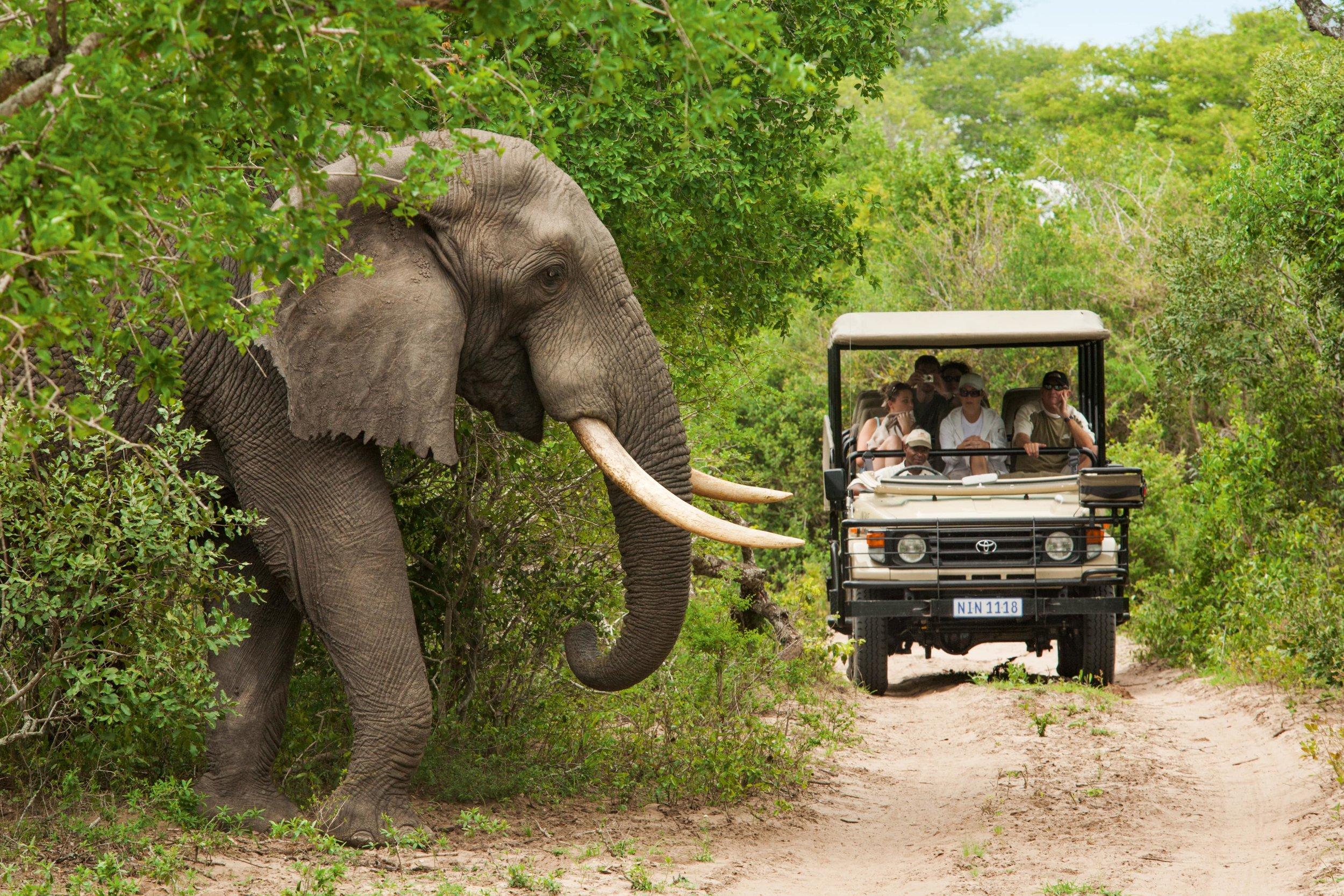 La Route Des Jardins - Les réserves naturelles dans cette région appelée Cap Oriental permettent aux visiteurs de profiter des Big Five dans leur paysage naturel. Incluez un séjour safari pendant vos vacances