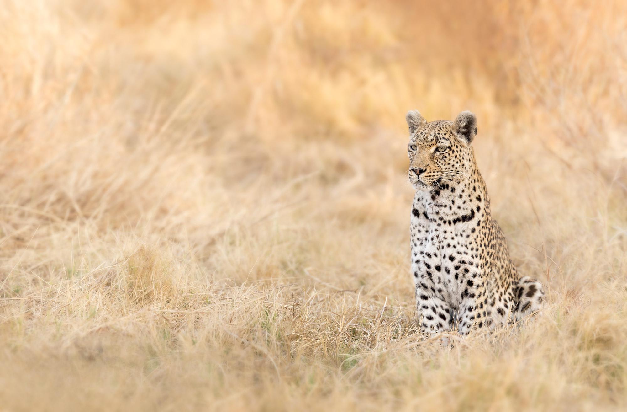 Destinations de safari -