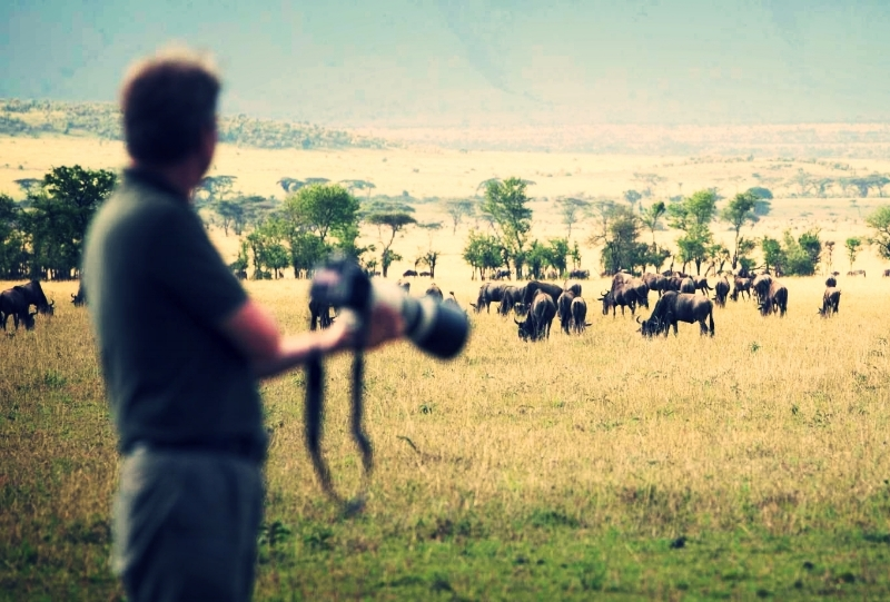 Safari photo -