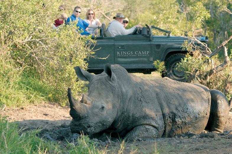 see-the-rhino-at-timbivati.jpg