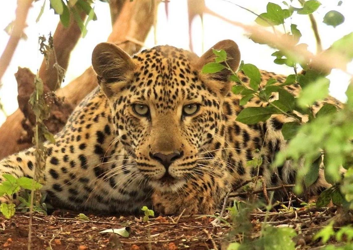 agenge_de_voyage_afrique_safari_CapOuPasCap45.jpg