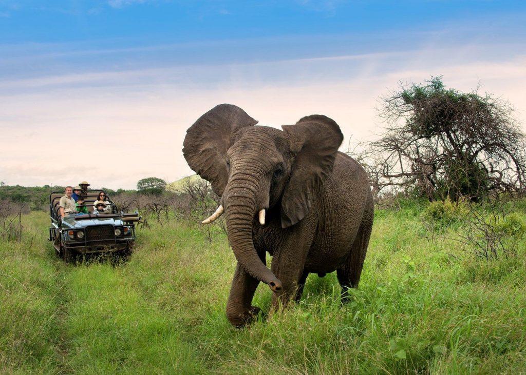 Agence_de_voyage_afrique_base en afrique du sud_capoupascap_voyage_cap_ou_pas_cap_safari africaine_Phine_Vlei_Lodge10.jpg