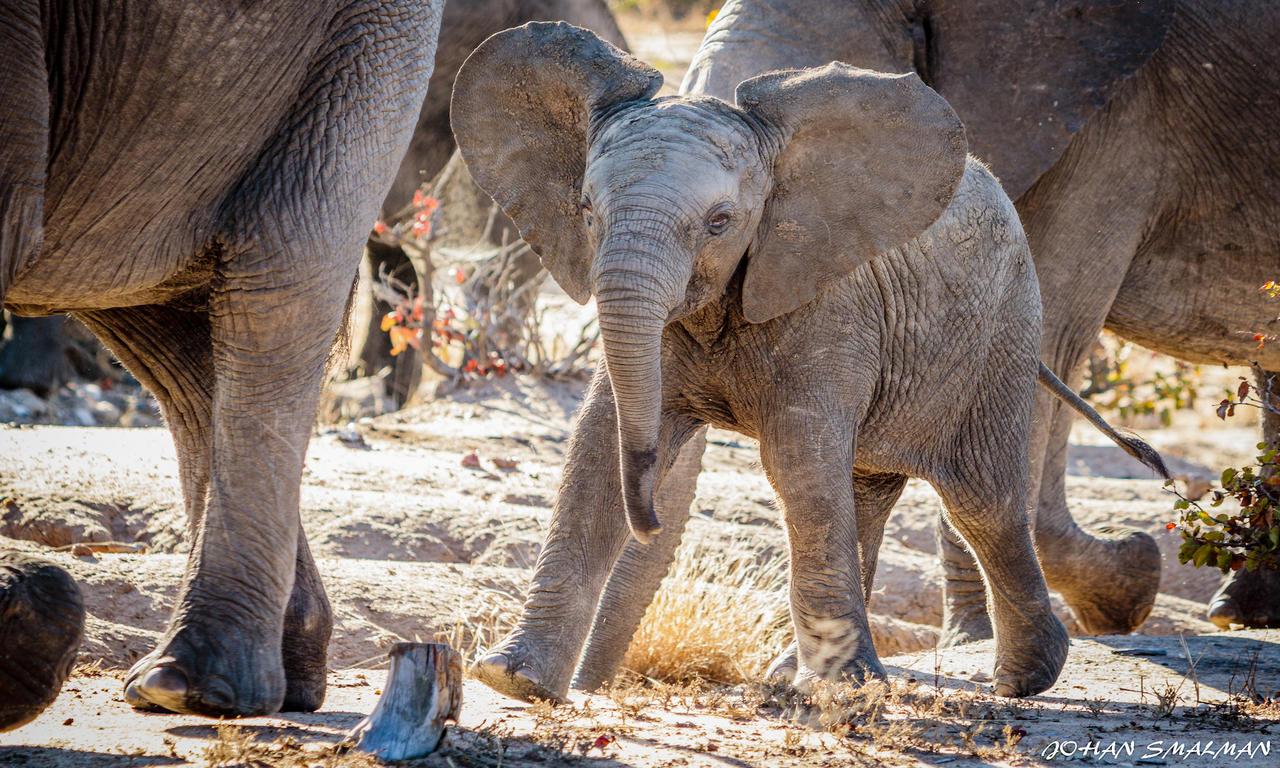agence_de_voyage_vacance_afrique_safari_le_parc_national_kruger_afrique_du_sud_capoupascap_cap_ou_pas_cap_voyage_safari_tente_de_lux_Sanbona_Bayethe_Lodge_05.jpg