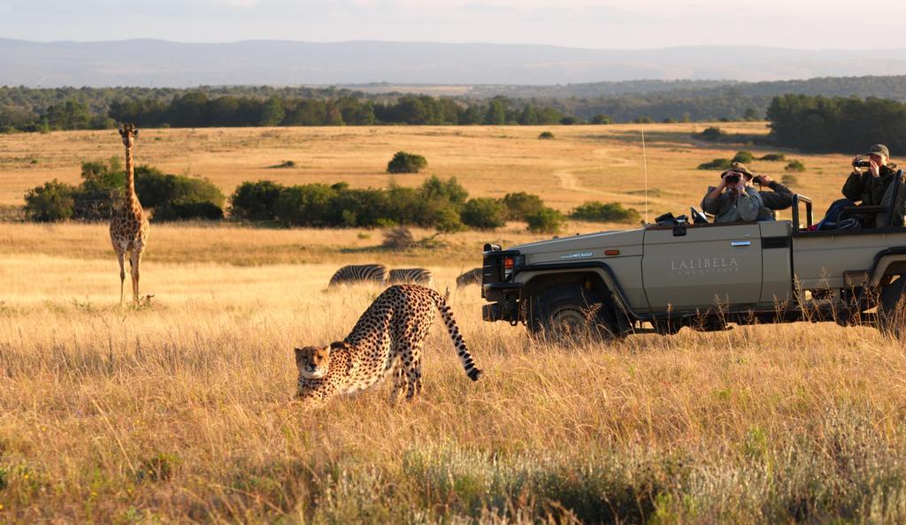 agence_de_voyage_vacance_afrique_safari_le_parc_national_kruger_afrique_du_sud_capoupascap_cap_ou_pas_cap_voyage_safari_tente_de_lux_la_route_des_jardins_lalibela_game_reserve34.jpg