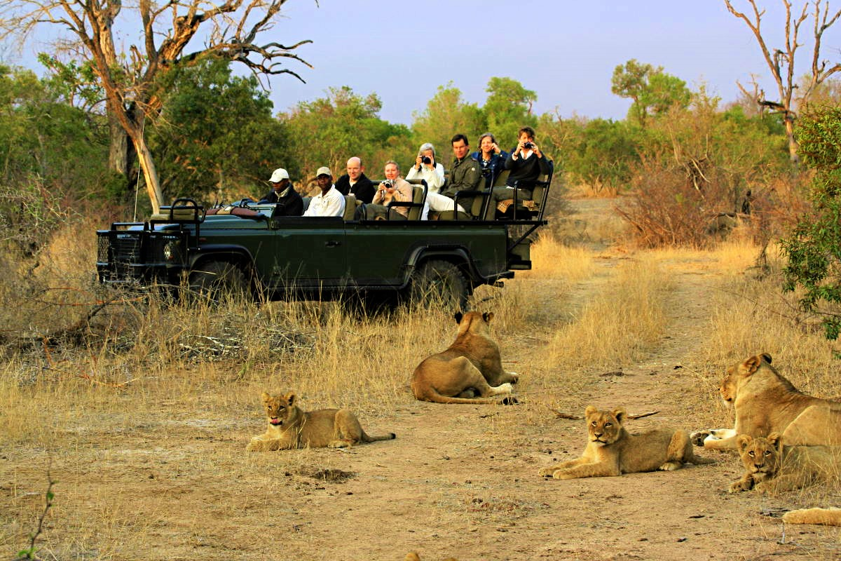 lions_on_game_drive1b7afcd.jpeg