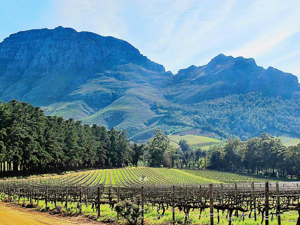 Vue_du_vignoble_de_Stellenbosch.jpeg