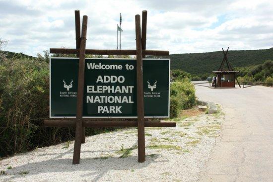 addo-elephant-national.jpg