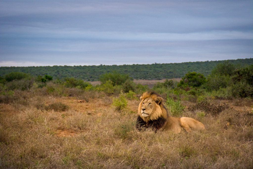 Agence_de_voyages_basée_en_Afrique_Tours_et_voyage_à_Cape_Town_et_les_vignobles_Voyage_de_noces avec_CapOuPasCap_Voyage_la_route_des_jardins_addo_elephant3.jpg