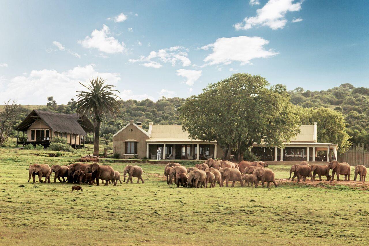 Elephants infront the house.jpg