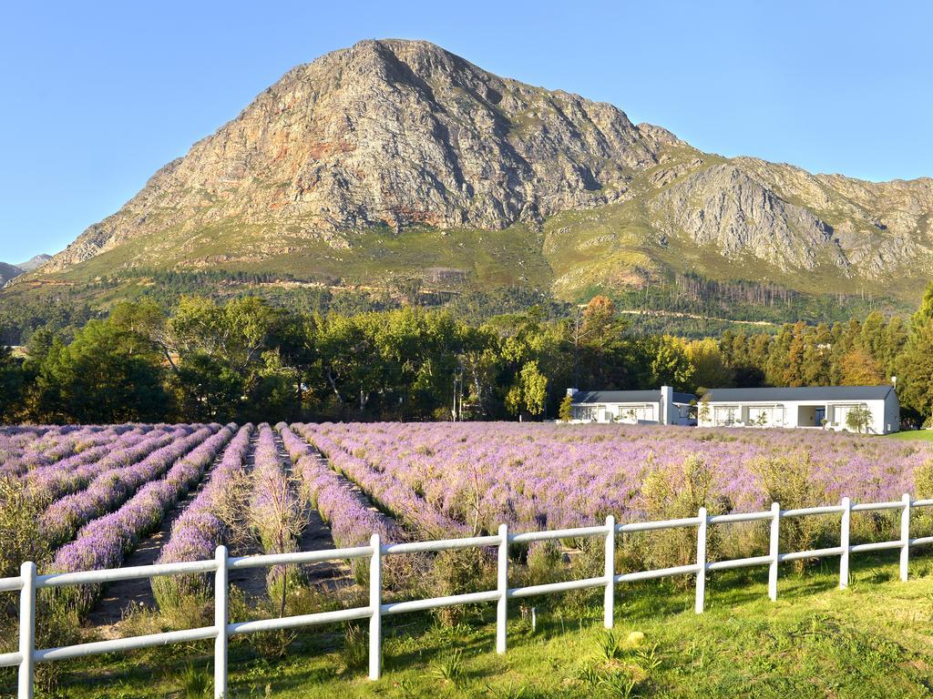 Agence_de_voyages_basée_en_Afrique_Tours_et_voyage_à_Cape_Town_et_les_vignobles_Voyage_de_noces avec_CapOuPasCap_Voyage_Corner house_Cape Town_Le cap_Lavender Farm Guest house4.jpg