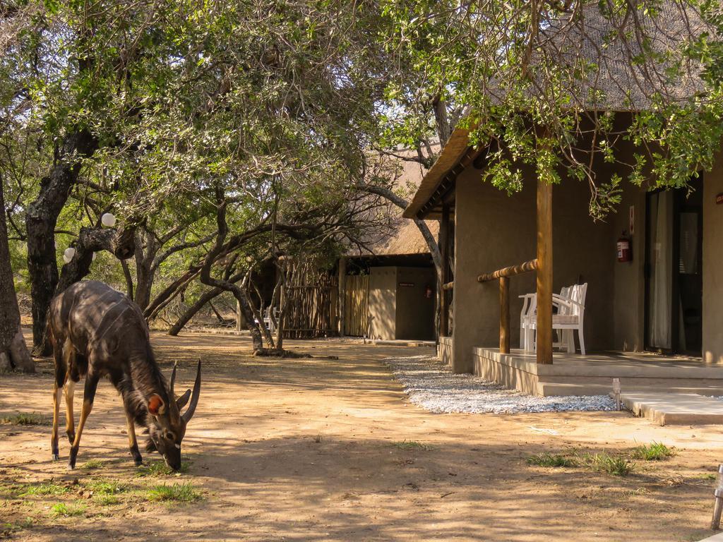 Travel_agency_based_in_South_Africa_Safaris_Sejour Activités_Kruger park_Panoramic route_Nelspruit_hoedspruit_bush_baby_river_lodge4.jpg