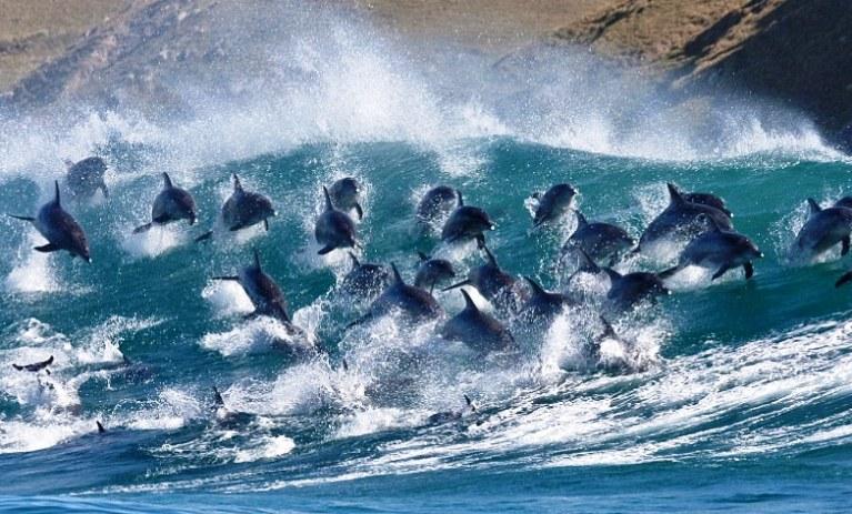 dolphin-caost.jpg