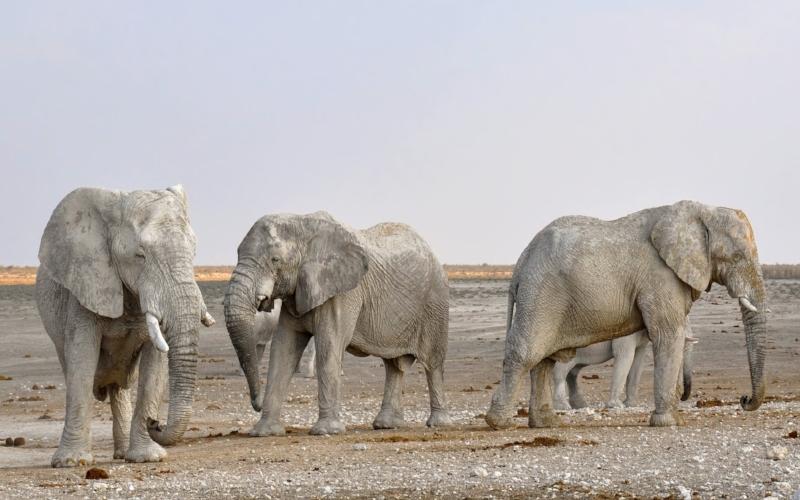 elephant-1170111.jpg