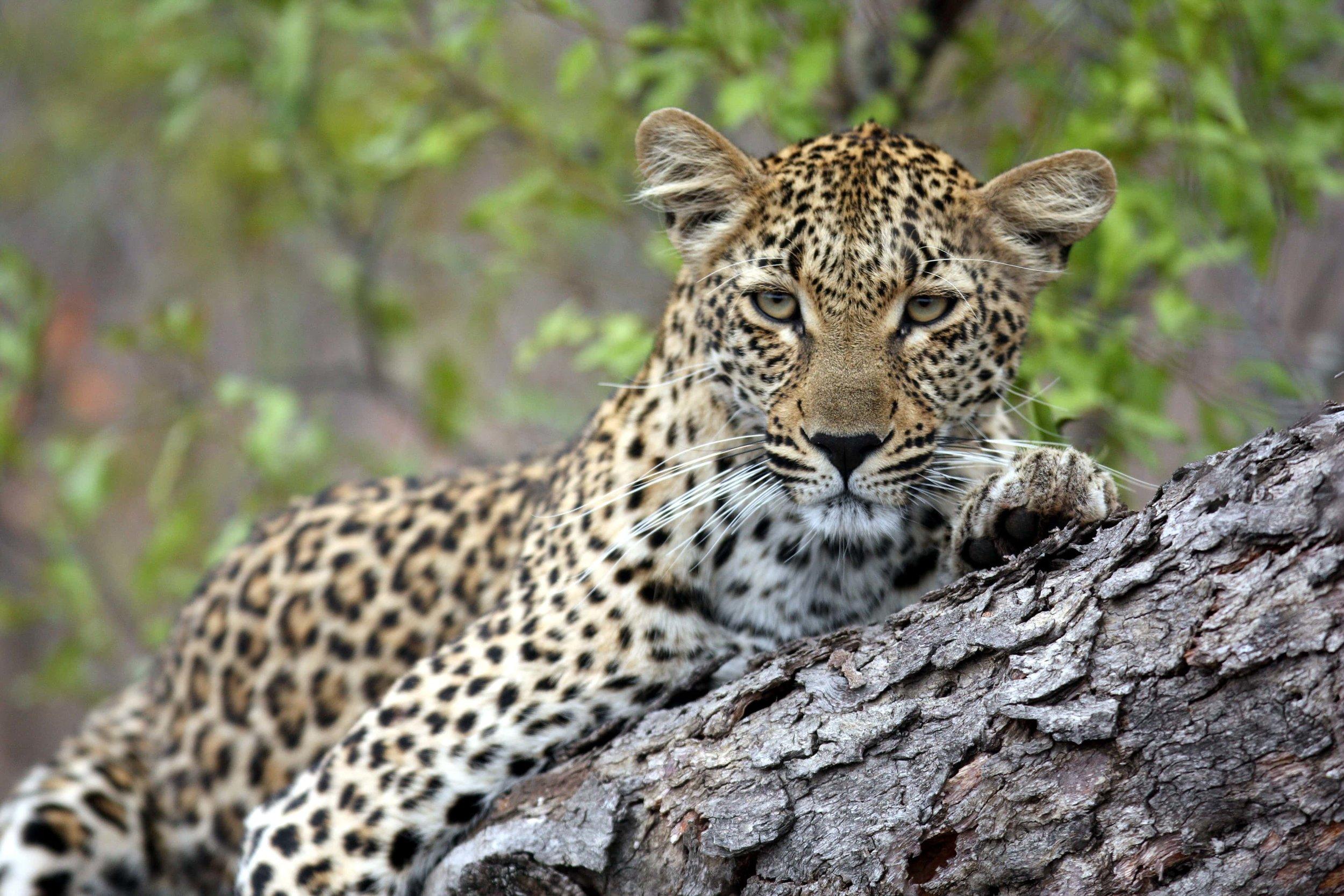 savanna safari 26-min.JPG