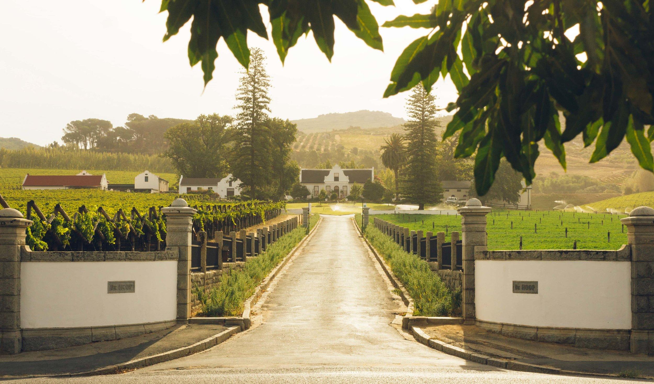 Food  Wine - Wineries - 09-Vineyard.jpg-min.jpg
